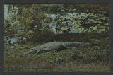Florida - postcards [Anna Maria Gove Collection]