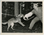 [Soldier Training a Dog]