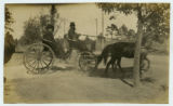[Men in a horse carriage]