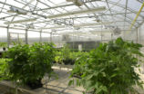 Greenhouse inside the Science Building