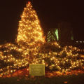 Christmas tree by cornerstone of the Students Buildings